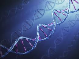 Изменение активности генов вызвало проблемы в крионике